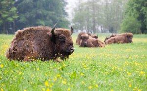 Nature Park Lelystad